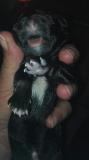 Eerstegeboren pup AIXA2 nest, 01 Mei 06u 's ochtends